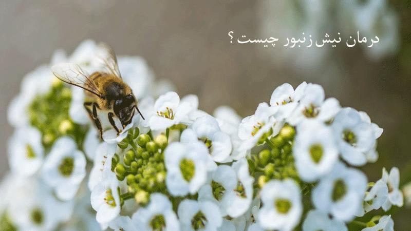 نیش زنبور تا چه حد جدی است؟ معرفی روشهای برای درمان فوری علائم
