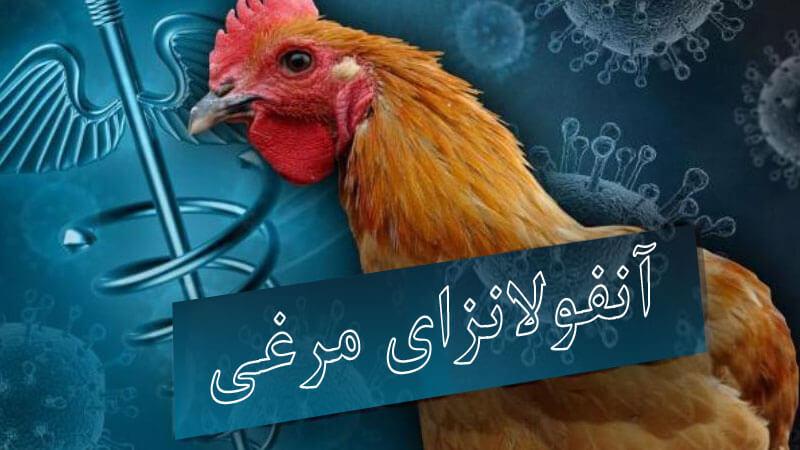 علائم آنفولانزای مرغی در انسان چیست؟ معرفی راهکار پیشگیری و درمان