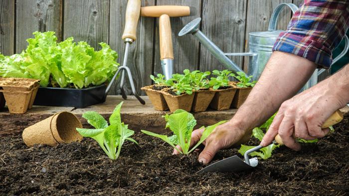 کاشت سبزی