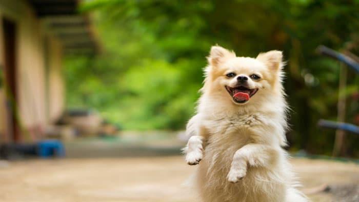 حیوانات خانگی راهی برای کنترل استرس